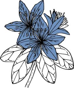 PacificRhododendron